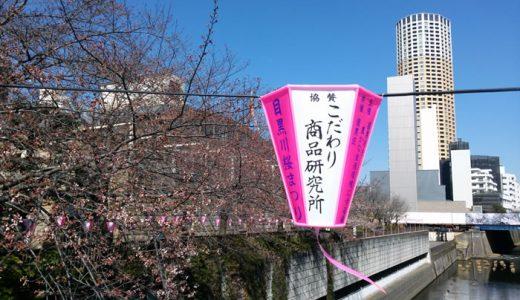 27日の目黒川の桜