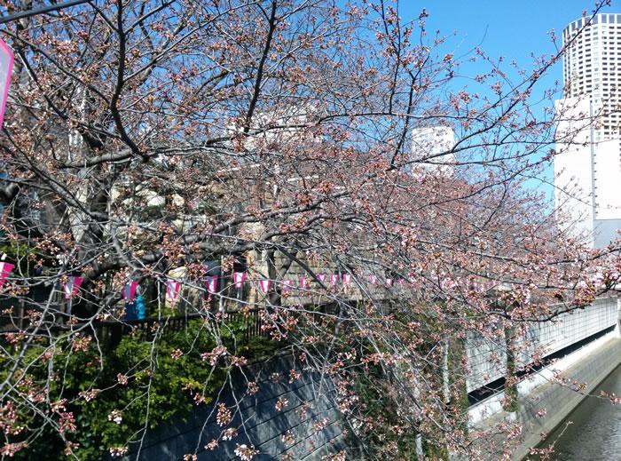 目黒川20150327