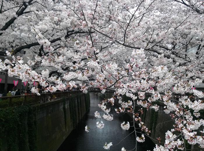 hanami_2015_03