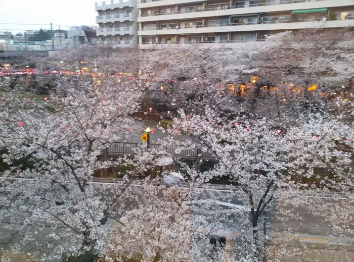 hanami_2015_06
