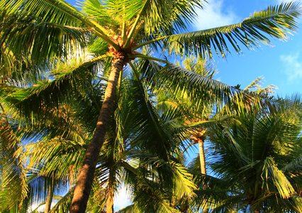 ココナッツオイルは、どの会社の商品を選べば良いの?