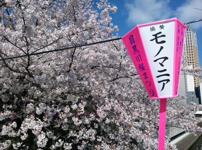 hanami_2015_17