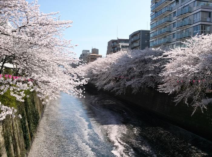 hanami_2015_24