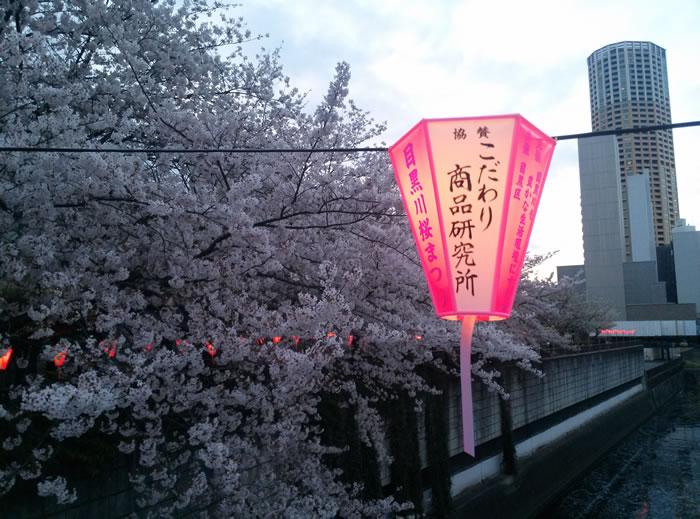 hanami_2015_26