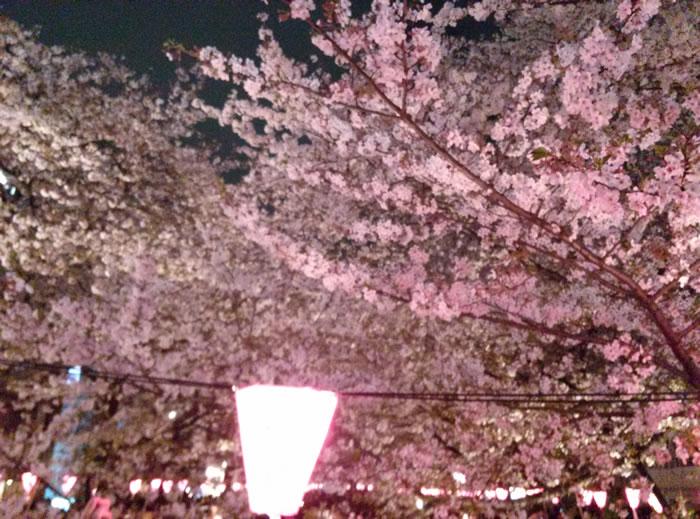 hanami_2015_36